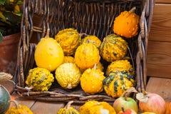 Fondo de la calabaza de la cosecha del otoño Fotografía de archivo libre de regalías
