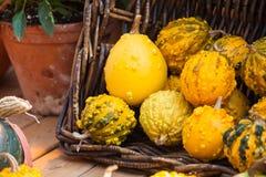Fondo de la calabaza de la cosecha del otoño Foto de archivo libre de regalías
