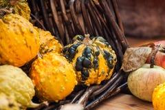 Fondo de la calabaza de la cosecha del otoño Imagen de archivo libre de regalías