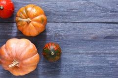 Fondo de la calabaza de la cosecha del otoño Fotos de archivo