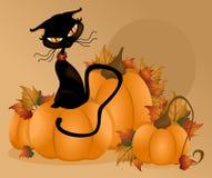 Fondo de la calabaza del gato Imagenes de archivo
