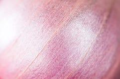 Fondo de la cebolla roja Tiro ascendente cercano del modelo y de la textura de la naturaleza Imagen de archivo