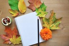 Fondo de la composición del otoño Fotos de archivo libres de regalías