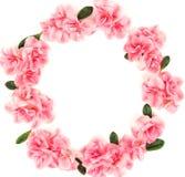 Fondo de la composici?n de las flores de la guirnalda Marco rosado del modelo de la azalea de las flores fotos de archivo