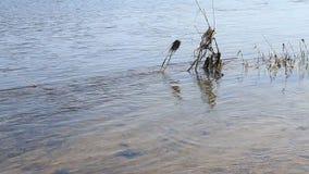 Fondo de la corriente del río almacen de metraje de vídeo
