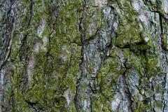 Fondo de la corteza de árbol fotografía de archivo libre de regalías
