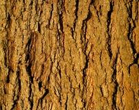 Fondo de la corteza de árbol Foto de archivo libre de regalías