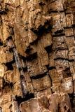 Fondo de la corteza de árbol Imagen de archivo