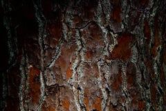 Fondo de la corteza de árbol de pino foto de archivo libre de regalías