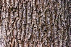 Fondo de la corteza de árbol del primer Fotografía de archivo libre de regalías