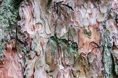 Fondo de la corteza del pino del primer Fotografía de archivo