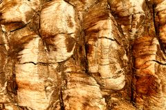 Fondo de la corteza de palmera Foto de archivo libre de regalías