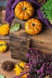 Fondo de la cosecha del otoño de la caída con la calabaza festiva decorativa de la acción de gracias Imagen de archivo libre de regalías