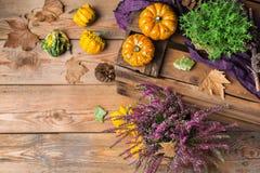 Fondo de la cosecha del otoño de la caída con la calabaza festiva decorativa de la acción de gracias Fotografía de archivo libre de regalías