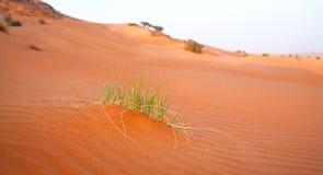 Fondo de la duna de arena de la hierba Fotografía de archivo libre de regalías