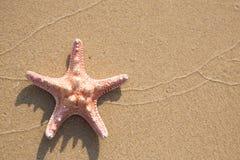 Fondo de la estrella de mar foto de archivo