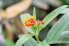 Fondo de la falta de definición de la planta de mariposa admitido el d3ia en la primavera Imagen de archivo libre de regalías