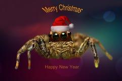 Fondo de la Feliz Navidad con la macro 2018 del insecto de la araña Foto de archivo