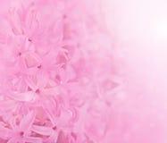 Fondo de la flor. Imagen de archivo libre de regalías