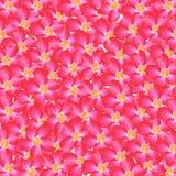 Fondo de la flor fotografía de archivo libre de regalías