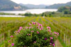 Fondo de la flor imagen de archivo