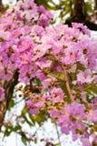 Fondo 234 de la flor Fotografía de archivo