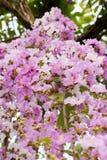 Fondo 233 de la flor Fotos de archivo