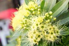 Fondo 262 de la flor Imágenes de archivo libres de regalías