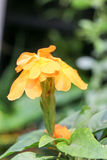 Fondo 316 de la flor Imagen de archivo