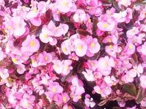 Fondo de la flor Fotografía de archivo