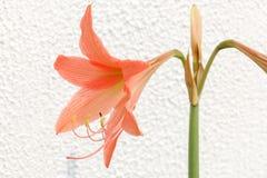 Fondo de la flor anaranjada Fotos de archivo libres de regalías