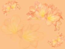 Fondo de la flor de Clivia Imágenes de archivo libres de regalías