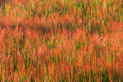 Fondo de la flor de la hierba Imagen de archivo libre de regalías