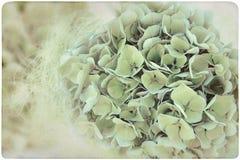 Fondo de la flor de la hortensia Imagen de archivo libre de regalías