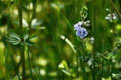 Fondo de la flor de la primavera Fotografía de archivo
