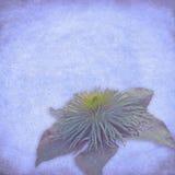 Fondo de la flor de la vendimia fotos de archivo libres de regalías