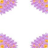 Fondo de la flor de loto del lirio de agua Fotografía de archivo