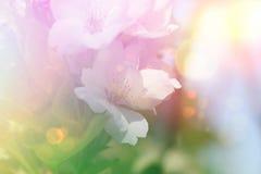 Fondo de la flor del flor del vintage Imágenes de archivo libres de regalías