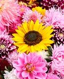 Fondo de la flor del otoño Fotografía de archivo
