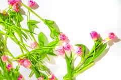 Fondo de la flor del resorte Tulipanes rosados apacibles en un fondo blanco Cosm?ticos naturales para las mujeres Enhorabuena y imagen de archivo libre de regalías