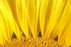 Fondo de la flor del verano Fotografía de archivo