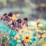 Fondo de la flor en el jardín del verano Imagen de archivo