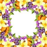 Fondo de la flor fresca Fotografía de archivo libre de regalías