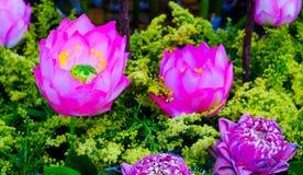 Fondo de la flor de Lotus Imágenes de archivo libres de regalías