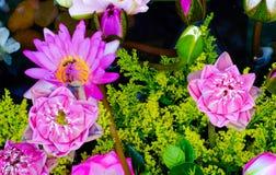 Fondo de la flor de Lotus Fotografía de archivo