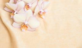 Fondo de la flor: orquídea anaranjada del melocotón en la tela del melocotón Fotografía de archivo libre de regalías
