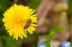 Fondo de la flor de la primavera del arte con la abeja 2 Imagen de archivo