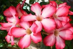 Fondo de la flor roja Imagen de archivo