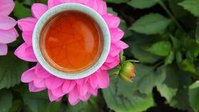 Fondo de la flor de la taza de té negro nadie cantidad del hd almacen de video