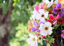 fondo de la flor y de la falta de definición Fotografía de archivo libre de regalías